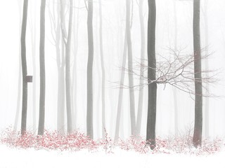 Orange leaves in winter snowy forest, birdhouse on tree, foggy background