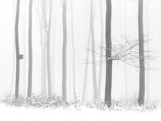 Black and white photo - leaves in winter snowy forest, birdhouse on tree, foggy background