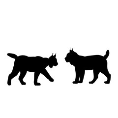 Silhouette of two lynxes. Animals feline family.