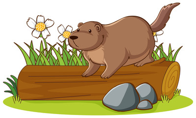 Isolated picture of groundhog on log