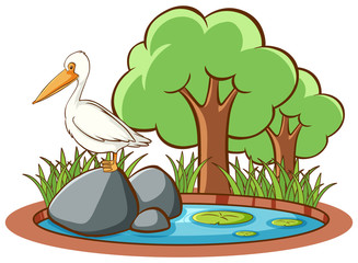 Isolated picture of stork in the park