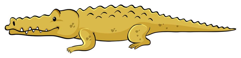 Yellow crocodile on white background