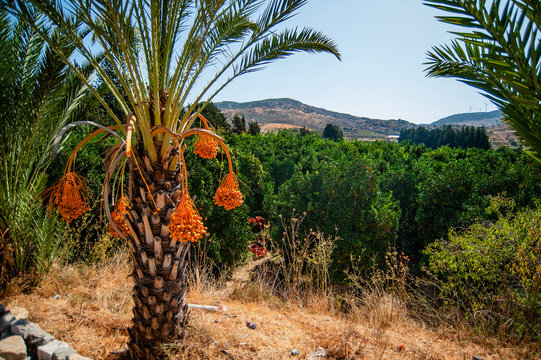 The village of Omodos is picturesquely situated on the slopes of the mountains among the vineyards and has long been famous for winemaking. It produces the most famous wine of Cyprus – Commandaria