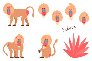 Set of baboons in a cartoon style. Children's pictures with animals. Cartoon illustration of a baboon vector icon on a white isolated background