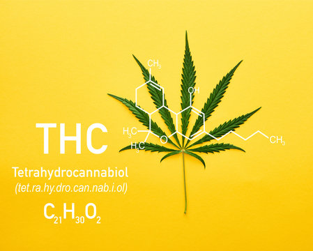 top view of cannabis leaf on yellow background with thc molecule illustration