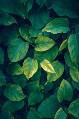 Poster Planten green plant leaves textured in the nature in autumn season
