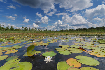 Foto op Plexiglas Waterlelies Landscape evening with sunset on a lake with lilies, with beautiful sky in summer season