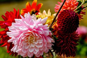 Beautify Garden Bouquet