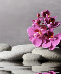 Tuinposter Orchidee Composition with spa stones, orchid pink flower on grey background.