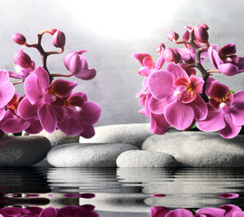 Deurstickers Orchidee Composition with spa stones, orchid pink flower on grey background.