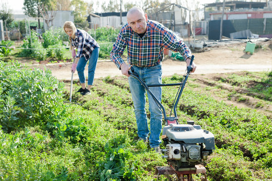 The family works on garden beds. Man using motorized cultivator. Woman cleans weeds with a rake