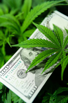 The economy of hemp industry. Tax on weed. Money and pot. Cannabis finance. Revenues in the marijuana industry and the medical industry. American dollar bill on cannabis leaves.