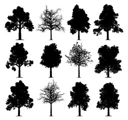 Oak trees silhouettes isolated on white background. Collection of 12 oak trees.