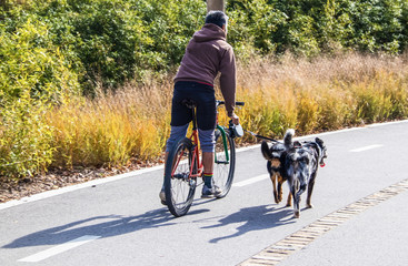 Man rides bike on paved trail with two Australian cow dogs on a leash in autumn - rear view with shadows and blurred background.