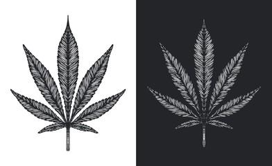 Hand drawn Marijuana leaf. Vintage engraved style Cannabis leaves on white and black background. Vector illustration