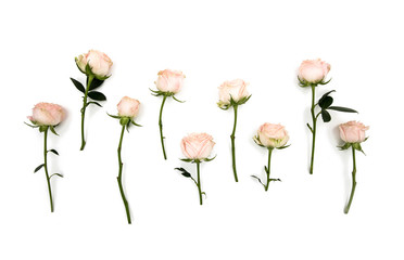 White pink rose flowers stems and leaves. In a row. Isolated on white background. View from above. Flat lay. View top.