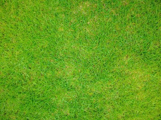 Backyard for background, Grass texture, Green lawn desktop picture, Park lawn texture, Green grass texture background, Green lawn.