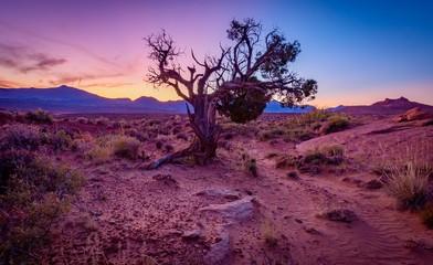 Poster Crimson tree in the desert