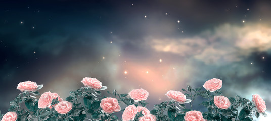Fantasy fabulous panoramic banner background of magical night sky with shining stars, mysterious clouds and delicate romantic pink rose flowers garden. Idyllic tender heaven scene, copy space.