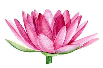 pink lotus flower, watercolor illustration, hand drawing, flora wedding