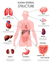 Realistic Human Internal Organs Infographics