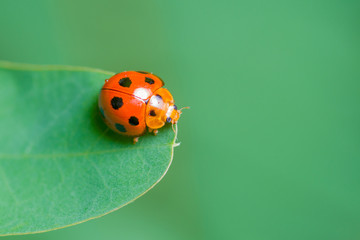 close-up image of ladybug on a green leaf