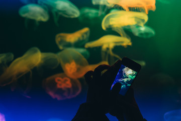 Mobile photo, people take pictures of jellyfish in aquarium