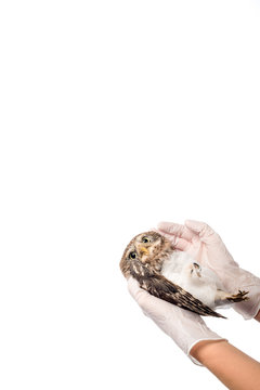 partial view of veterinarian holding wild injured owl isolated on white with copy space