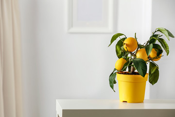 Lemon tree in yellow flowerpot in bright white colors with picture frame with blurred white wall background. Nice delicate decorations on small white table.