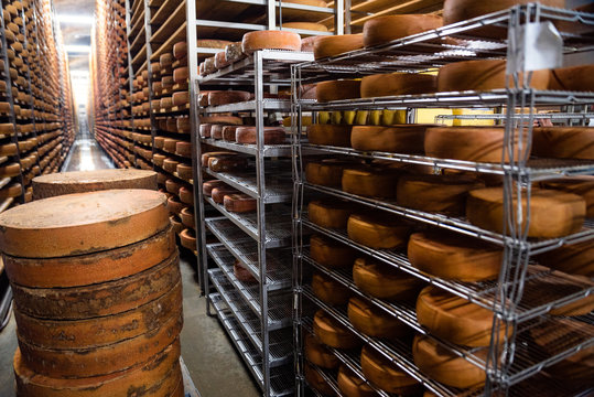 long wooden shelvings, filled with hard cheese wheels, and testing equipment in cheese ripening chamber; affinage cellar; quality control; authentic, traditional cheesemaking; Alps