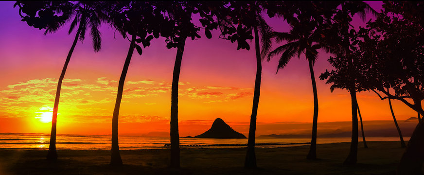 sunset in Oahu with palm trees