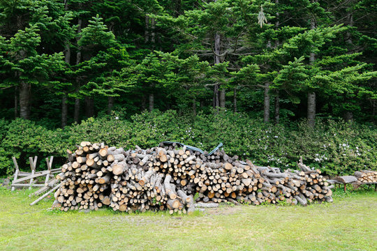 PIle of firewood logs in a forest.