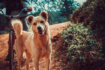 Cachorro na estrada