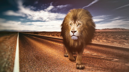 lion on road Wall mural