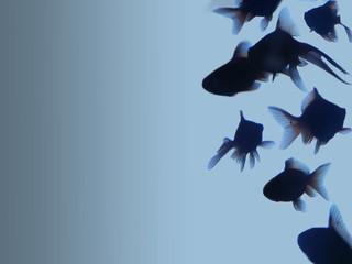 goleden fish on blue gradient background