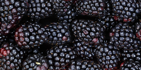 Wall Mural - Blackberries berry fruits collection food background blackberry banner berries fresh fruit