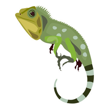 Green iguana lizard. Isolated vector illustration. Flat cartoon style.