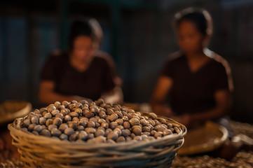 Fototapeta Nutmeg harvested in basket, in warehouse, with dark, soft-focus women sorting behind, Banda, Maluku, Indonesia obraz