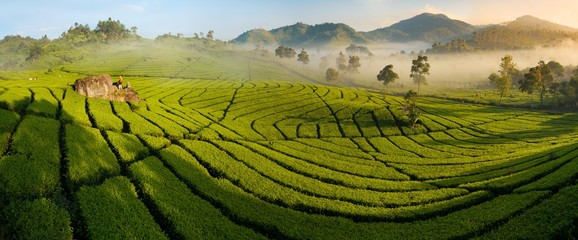 Tea plantation panorama at sunrise, Ciwidey, Java, Indonesia