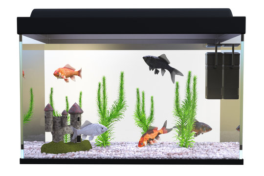 Fish tank / Aquarium with gold fish and plants isolated on white, 3d render.