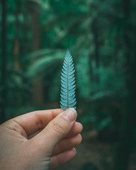 hand holding a silver fern