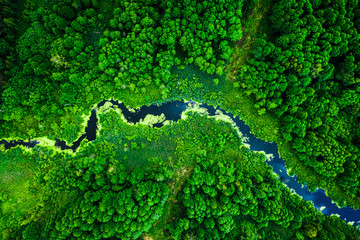 Photo sur Plexiglas Rivière de la forêt Amazing blooming algae on green river, aerial view