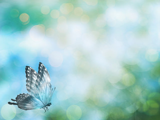 Fotobehang Bloemen Natural background with butterfly