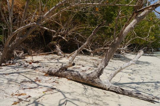 Totholz am tropischen Strand in Thailand