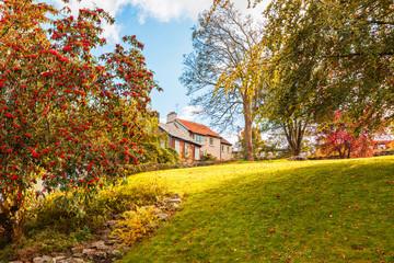 detail of autumn park with house near Cork, Ireland