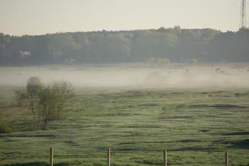 Spoed Foto op Canvas Khaki early morning with fog