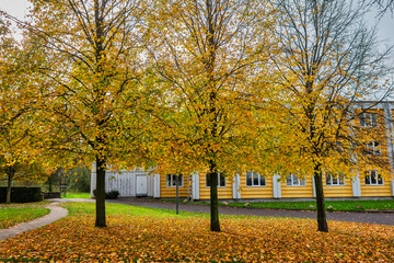 Autumn leaves in the center of Vejle, Jutland Denmark