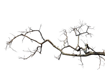 Dead tree isolated on white background with clipping path, black and white dead tree