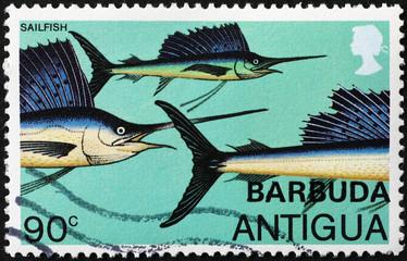 Sailfish on postage stamp of Antigua