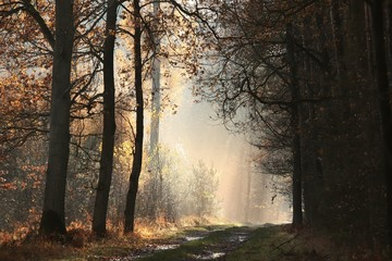 Keuken foto achterwand Weg in bos Country road through the autumn forest on a foggy morning